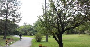 um ciclista passeia em uma trilha em meio a árvores e grama no Parque Ecológico de Barueri