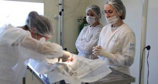 três veterinárias em volta de uma mesa cirúrgica, onde um animal é operado, presumidamente para castração