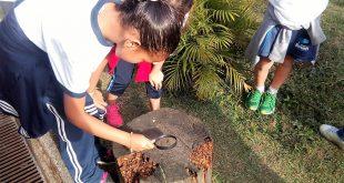 Alunos da Bruno Tolaini participam de projeto de pesquisa com insetos