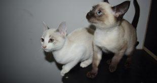 dois gatos jovens em cima de uma mesa