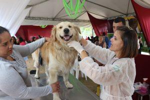 golden retriever sendo atendido por veterinária enquanto dona o segura