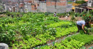 horta comunitária em Itapevi