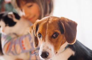 Shopping Tamboré recebe Feira de Adoção de cães e gatos