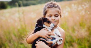 Pets buscam por novos lares em feira de adoção promovida pelo Parque Shopping Barueri