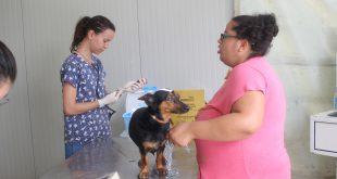 Barueri/SP – Agendamento para castração gratuita de cães e gatos abre quarta, dia 27