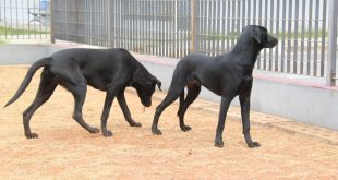 Barueri/SP – Febre maculosa é nociva para animais domésticos e seres humanos